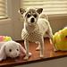 Small Dog Lamb Hat & Sweater pattern
