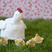 Mother Hen and Chicks pattern