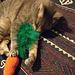 carrot top cat toy pattern