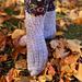 November Rain Socks pattern