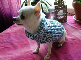 Knitted dogsweater