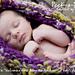 Peek-a-Boo Pod Newborn Photography Prop pattern