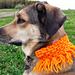 Orange Dog Scarf pattern