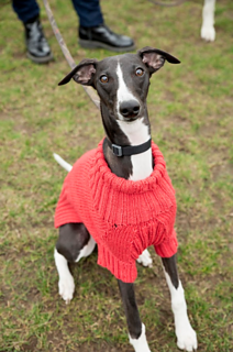 Dog Days Sweater Pattern By Wool And